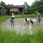 Learning to plant rice. Always wanted to know more about this!