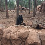 Bearizona Wildlife Park Foto