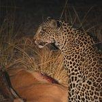 Kafunta Safaris, S. Luangwa N.P., Zambia