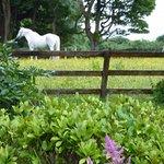 Corrib View Country House Foto