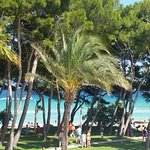 Foto de IBEROSTAR Playa de Muro