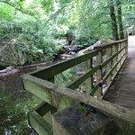 Foto de The Dingle (Nant y Pandy) Nature Reserve