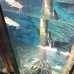 diversidad de peces