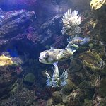 Foto di Barcelona Aquarium