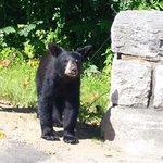 Baby Bear at entrance to Park