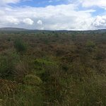 Culloden Battlefield Foto