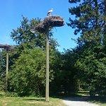 Photo of Le Parc des Oiseaux