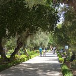 Photo of Jardin el Harti