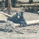 Bearizona Wildlife Park Foto