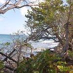 Un chemin s'immisce entre les arbustes de bord de mer et permet de choisir son site idéal !