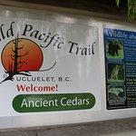 Wild Pacific Trail Foto