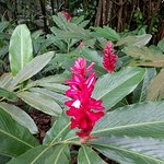 Photo de Seychelles National Botanical Gardens