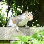 Squirrel on railings in the Italian Gardens
