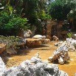 Cascada y fuente en el jardin