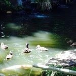 Sweet ducks and ducklings!