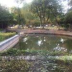 Bilde fra 2273293
