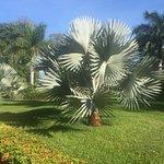Hotel Riu Guanacaste Foto