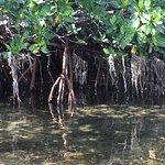 Foto di Key West Eco Tours