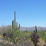 View from Saguaro National Park, Tucson AZ