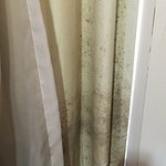 Mold on the curtains
