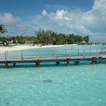 La raie vue nageant à proximité de la plage et des premiers bungalows tout les jours