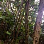 Cairns Botanical Gardens Foto