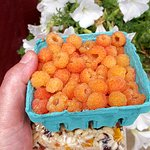 The yellow raspberries that were sweeter than candy and found nowhere else.