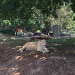 Photo of Zoologico Guadalajara