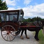 Horse drawned buggy