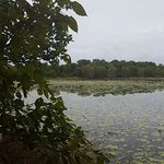 Foto de Cattana Wetlands