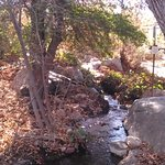 A stream in the desert? A secret place to sit and contemplate...yes...at Tohono Chul!