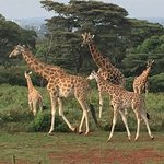 View of the giraffes from the Manor before they come up in the evening
