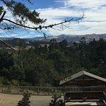Foto di Cambria Pines Lodge