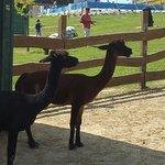 Zobori KalandoZoo - ADventure Park and Petting Zoo