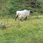 Goats along the road