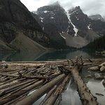 Wood logs in Lake Moraine