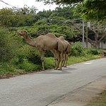 Photo de Baobab Holiday Resort