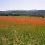 le plateau de Vassieux en Vercors