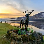 Stan the stag sunrise at Briar Cottages Lochearnhead