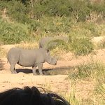 Rhino at water hole