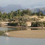 Maspalomas Charca paisaje, Maspalomas environment