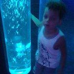 FB_IMG_1469532831342_large.jpg