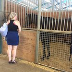 Modern horse barns also make an enjoyable tour both for visitors as well as the competitors