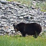 Black bear sharing our beach