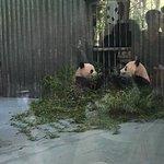 上海動物園の写真