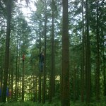 Travelling down zip wire among the trees.