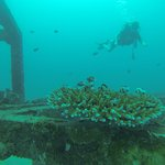Merlin Divers - Kamala Diving Center Foto