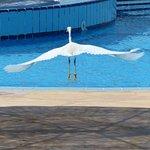 Photo de SENTIDO Oriental Dream Resort