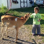 Foto di Hull-O Farms, Family Farm Vacations