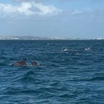 Dolphins only a few meters away from the shore